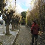 Trees in Calafate